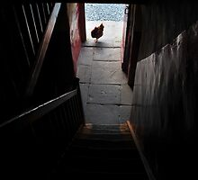 Home to roost by ragman