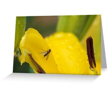 Fly on a Lily Greeting Card