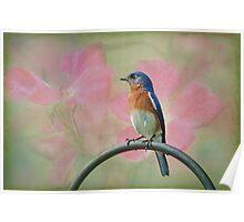 Bluebird & Roses Poster
