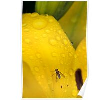 Fly Resting on a Lily Poster