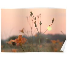 Wood Lily Sunset Poster