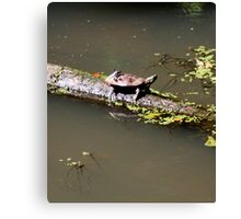 Water Turtle and Hitchhiker '09 Canvas Print