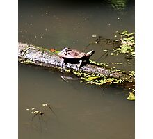 Water Turtle and Hitchhiker '09 Photographic Print