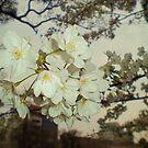 A flower in Japan by Aimerz
