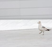 White on White by Rachel Lilly
