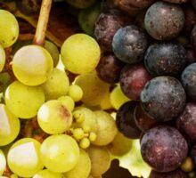 Fruit of the Vine Sticker