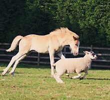 the grand national.......sheep races pony by 8oss