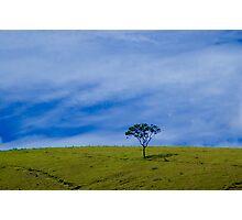 tree solitary Photographic Print