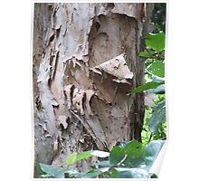 Bark detail Poster