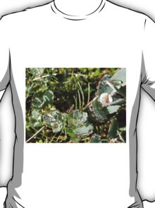 Dewdrops Like Diamonds, Cradle Mountain, Tasmania, Australia. T-Shirt