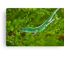Matching Colors Canvas Print