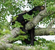 Sleeping like a bear. by Deb Campbell