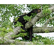 Sleeping like a bear. Photographic Print