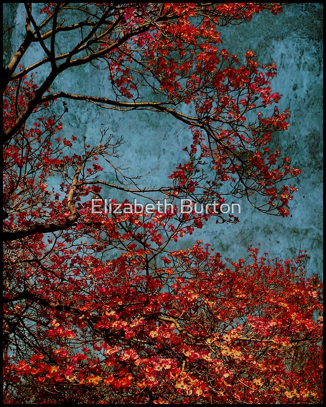 Cherry Blossom by Elizabeth Burton