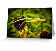 Walking Stick in Kansas City, MO Greeting Card