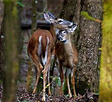 A Mothers Love by Deb Campbell