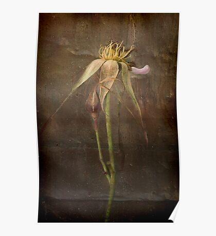 Rust 'n Roses ~ #7 Poster