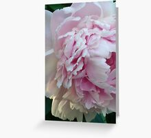 Feathered petals Greeting Card