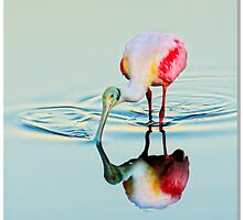 Spoonbill Painter by Phillip  Simmons