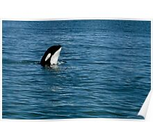 The Spy - Orca Whale  Poster