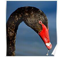 Black Swan Portrait Poster