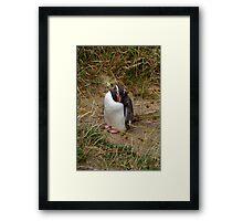 Fiordland Penguin ? Framed Print