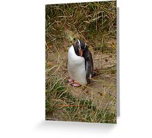 Fiordland Penguin ? Greeting Card