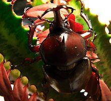 Rhinosaurus Beetle by Jeff Harris