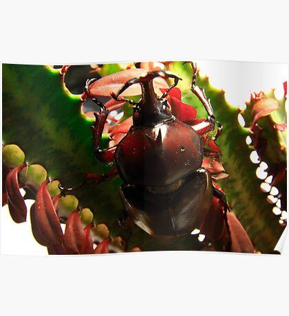 Rhinosaurus Beetle Poster