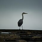 heron by lukasdf
