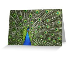 Peacock wide Greeting Card