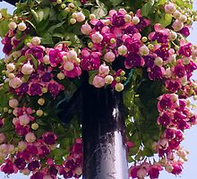 Big Blooming Basket by tonymm6491
