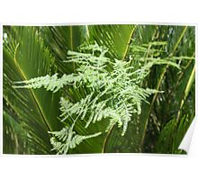Palm with lacy fern Poster