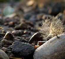 Fallen on the rocks by Ashley Jansson