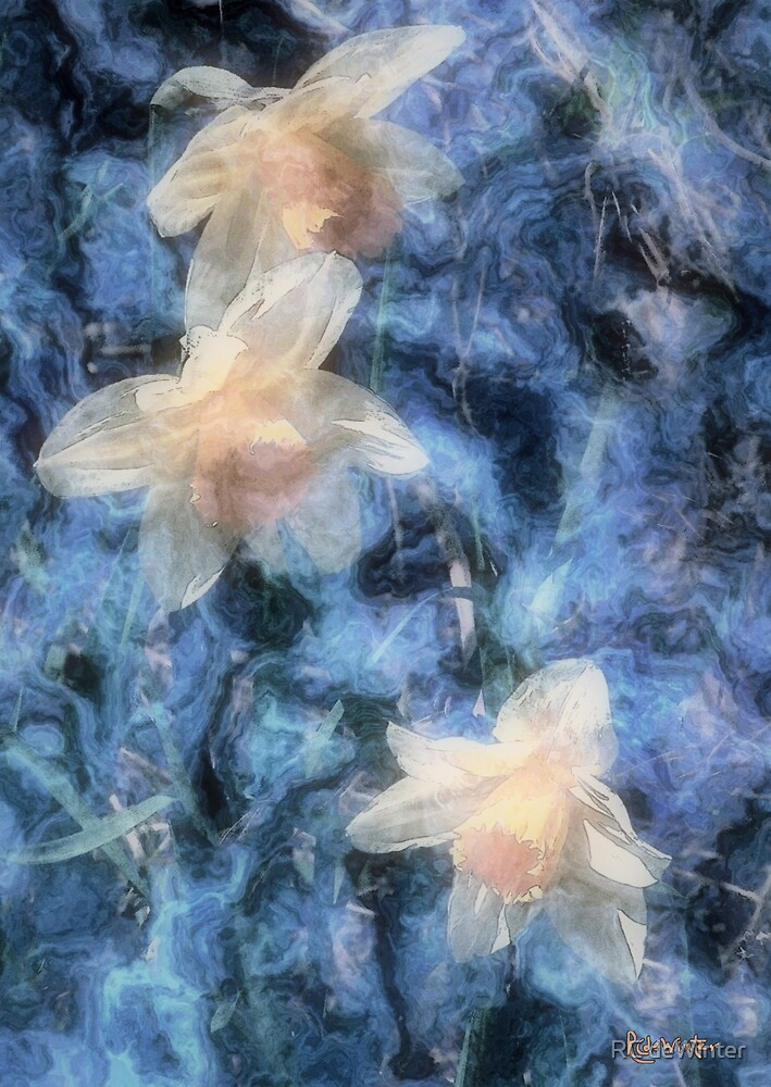 Nighttime Narcissus by RC deWinter