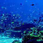 Fish Tank by dieselpete