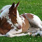 Precious Little One by lorilee