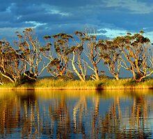 """ Snowy  River "" Marlo Australia  by helmutk"