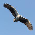 """"""" Let Eagles fly """" by helmutk"""