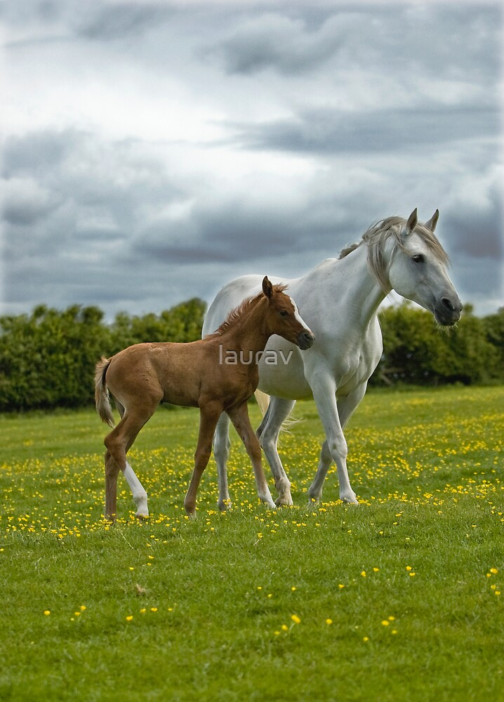 Mare and Foal by laurav