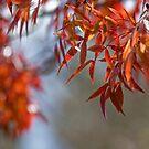 Autumn by johnwheat
