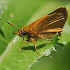 Little Skipper by Lynda  McDonald