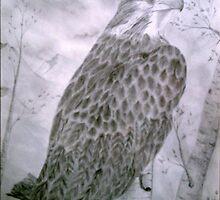 praire falcon by dianalynn