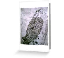 praire falcon Greeting Card