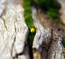 Pollen by tarynb