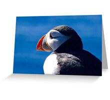 Puffin face Greeting Card