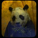 Panda by Catherine Hadler