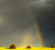 Rainbow at High Speed by Jan  Tribe