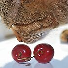Cherry Cat by Karen Martin