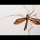 Da Bug by lizwaltzes